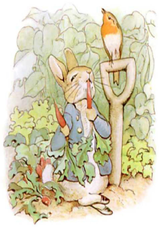 حكاية الأرنب بيتر